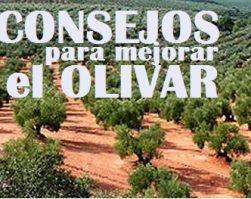 CONSEJOS PARA MEJORAR EL OLIVAR